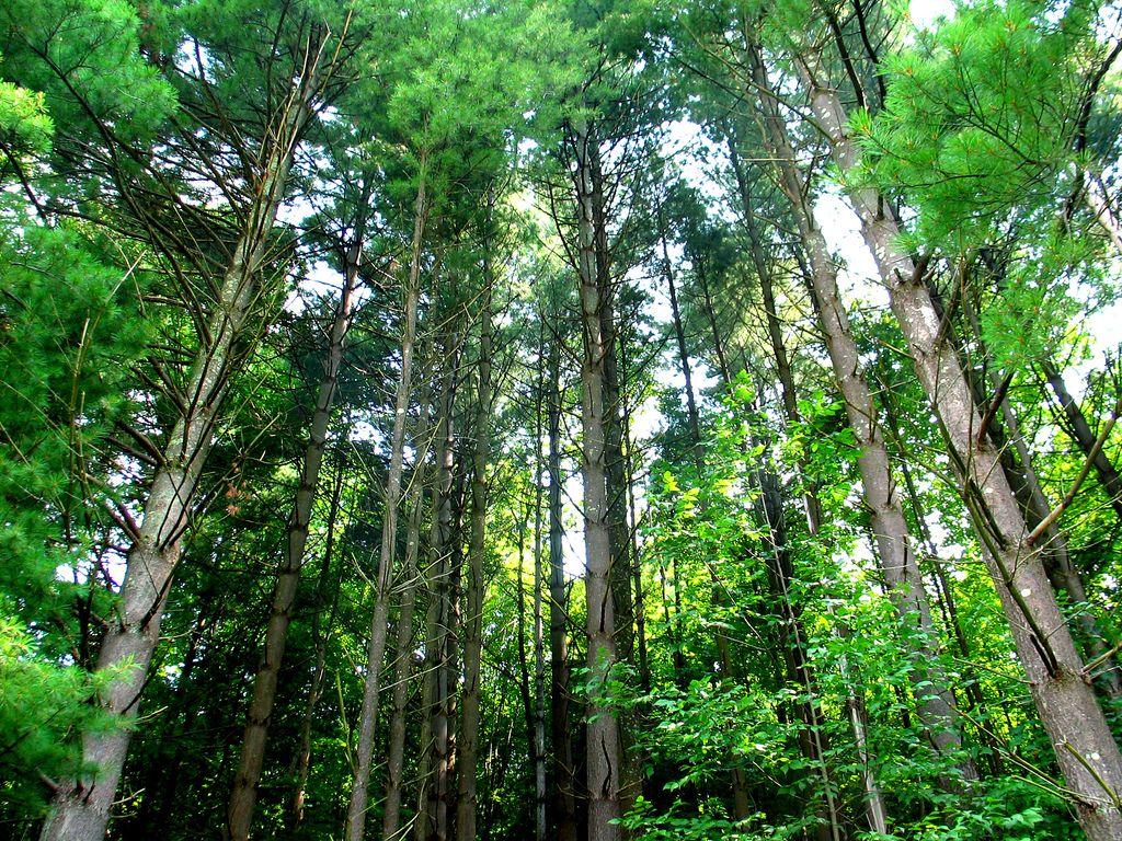 arbres journée de la terre